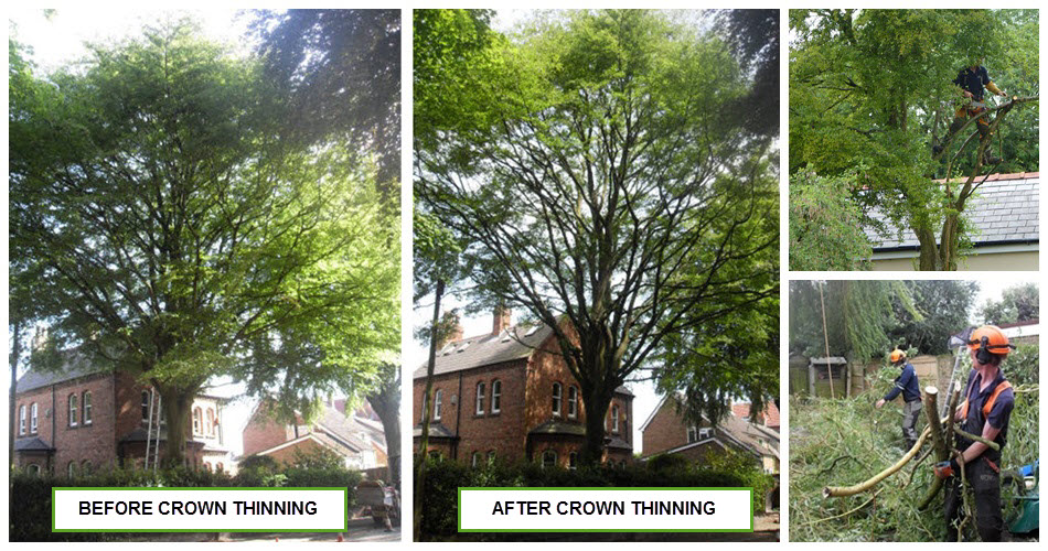 Crown Thinning, Warrington