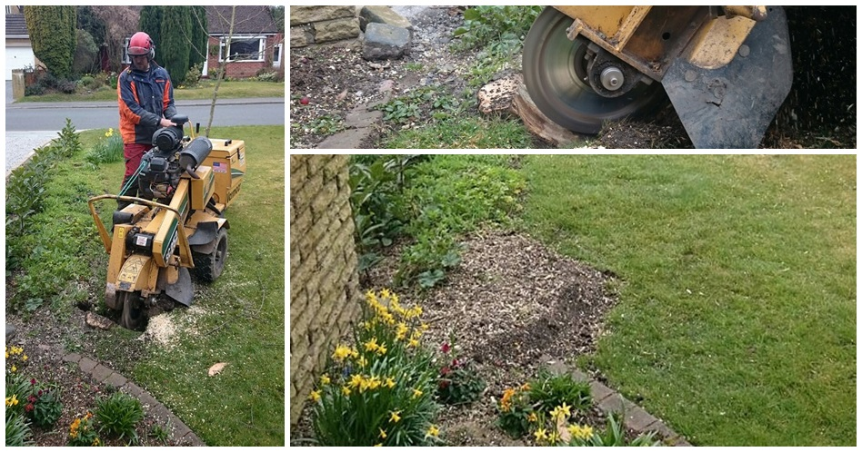 Stump Grinding, Stump Removal underway, and end result